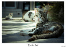 District Cat by MrColon