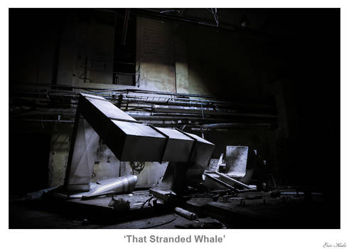 That Stranded Whale