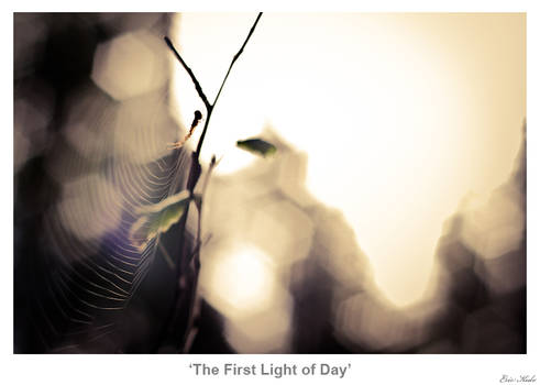 The First Light of Day