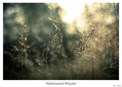 Habituated Rituals