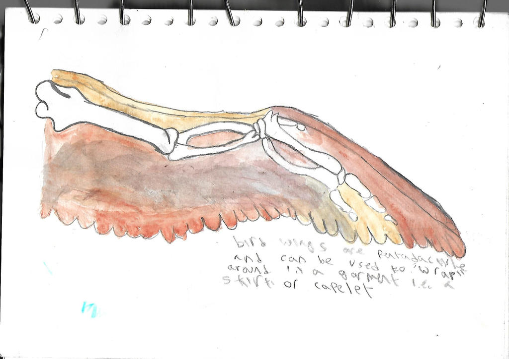 Bird wing: bone structure by Drapery-and-Dresses on DeviantArt