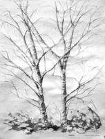 Birch Trees by Xipiti