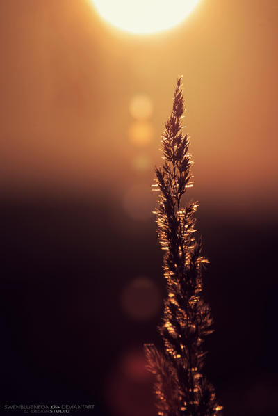 Le flare... by swenblueneon