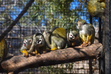 Common Squirrel Monkey - The Troop by Rad-Puppeteer