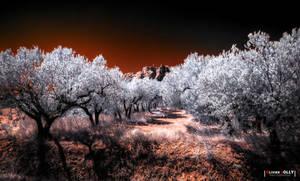 Sweet Provence