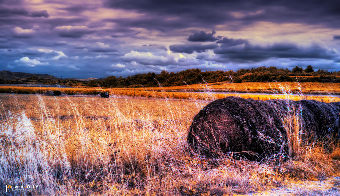 Golden Field by bamboomix