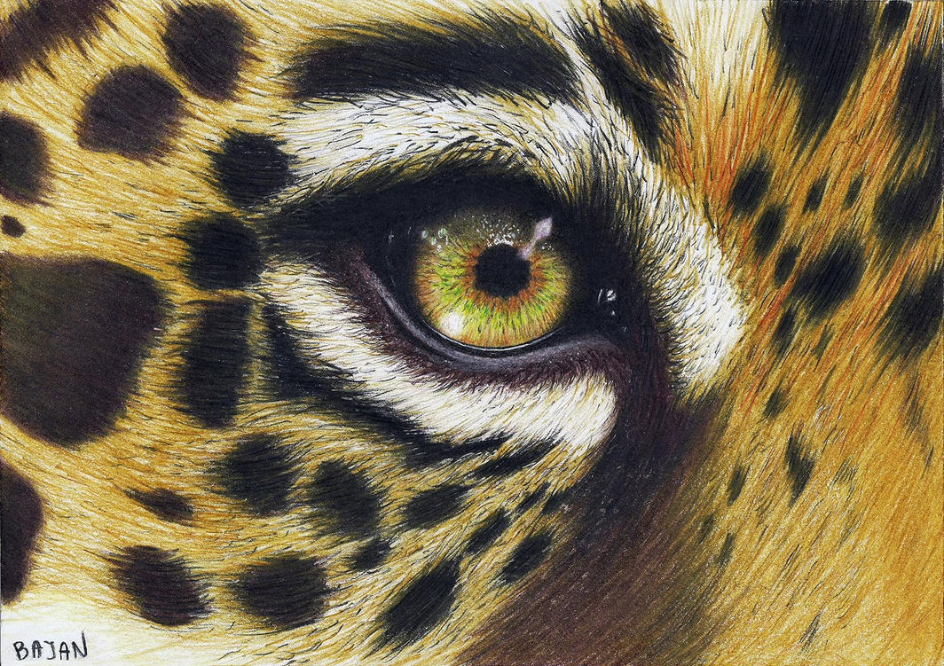 leopard eye close up - photo #15