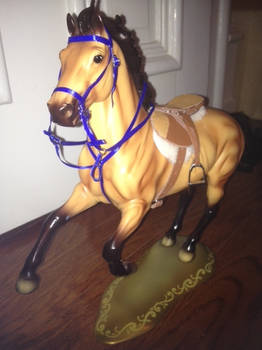 Tack - Running Martingale and Bridle