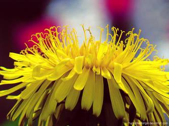 Little yellow world by HypnotisedAngel