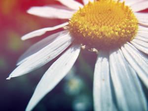 Field of wishes by HypnotisedAngel