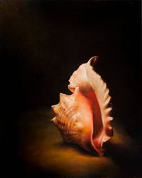 Conch by evincent