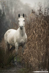 Finn - the 'wild' horse by Pfeffernase