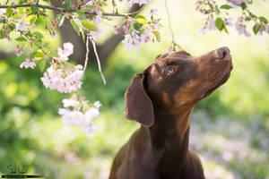 Waiting for Spring... by Pfeffernase
