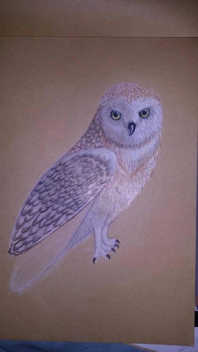 the birds that i draw by mamaladzmal