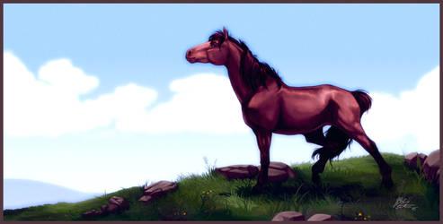 Mountain pony