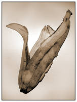 Banana2 by pixelcatcher