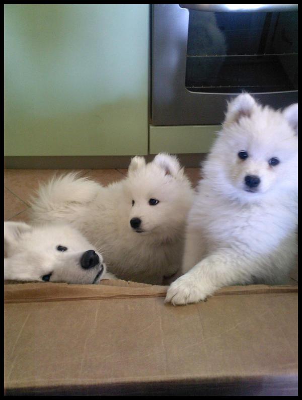 .Puppies. by Para-Noir12