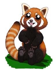 Red Panda by Elvan-Lady