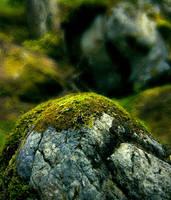barns-en stone moss