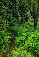 barns-en hidden path by barns-en