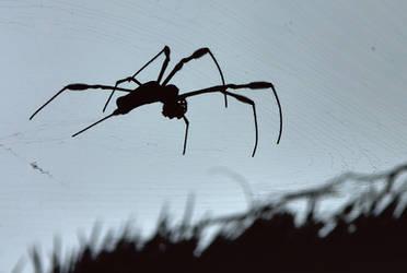 barns-en spider