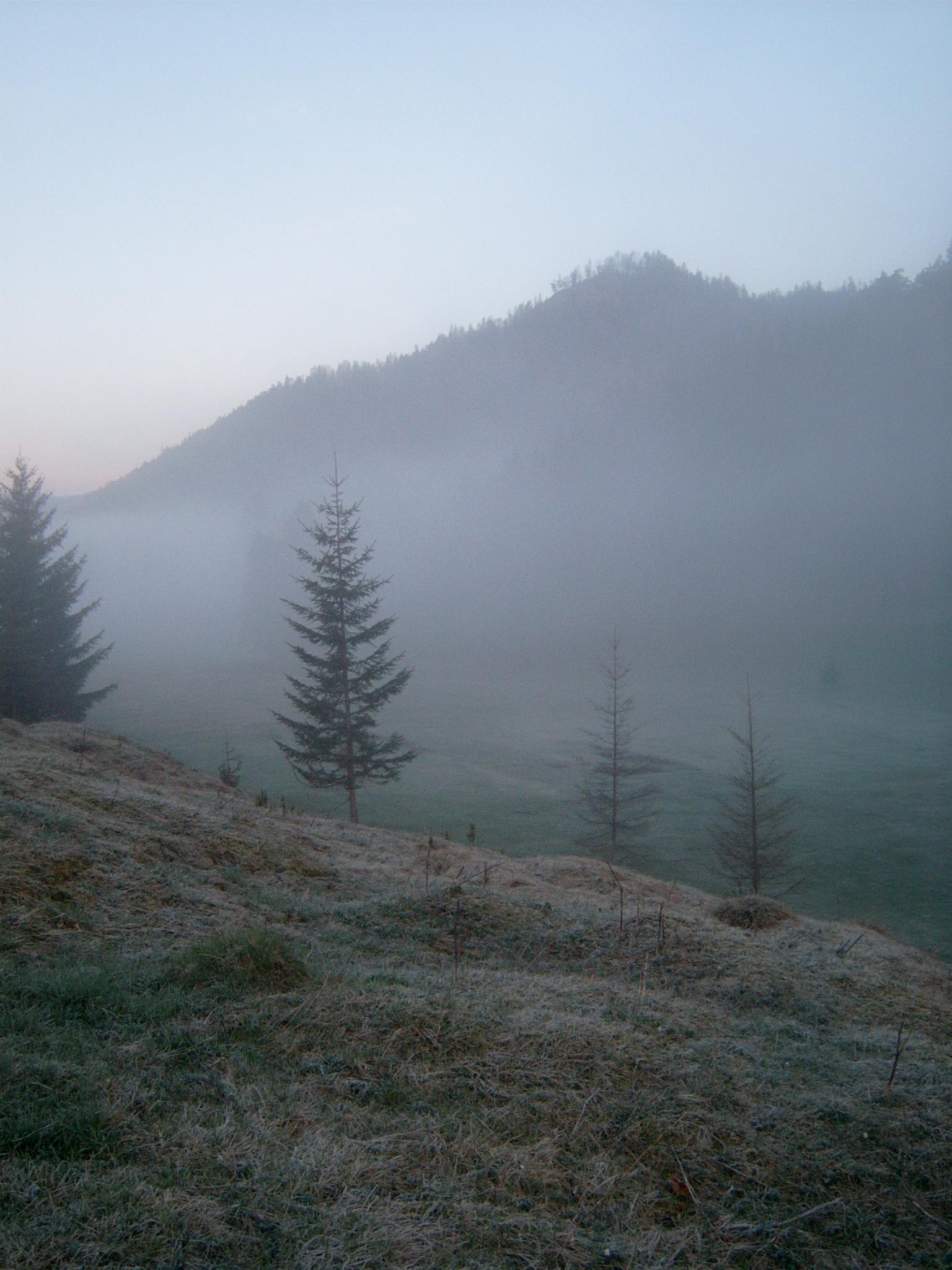barns-en misty woods