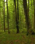 barns-en wood II