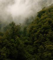 barns-en westland rainforest by barns-en