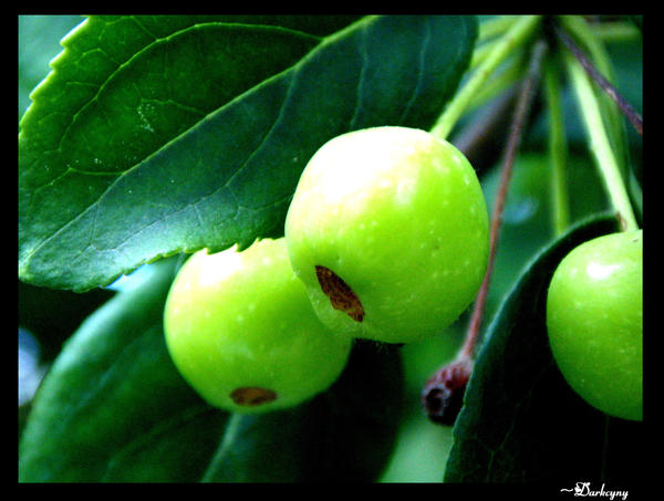 baby green apples ii by darkcyny on deviantart