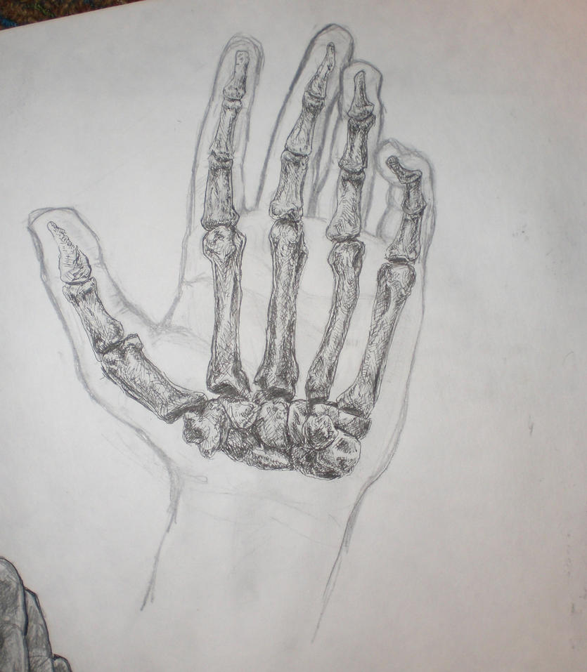 Hand anatomy: contour/skeleton by FOOLY-COOLY on DeviantArt