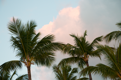 Palm trees in the clouds by JuliaRemesova