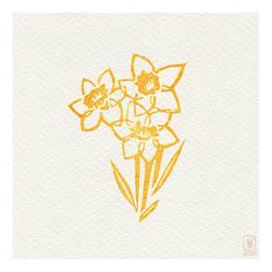 Day 55 - daffodil
