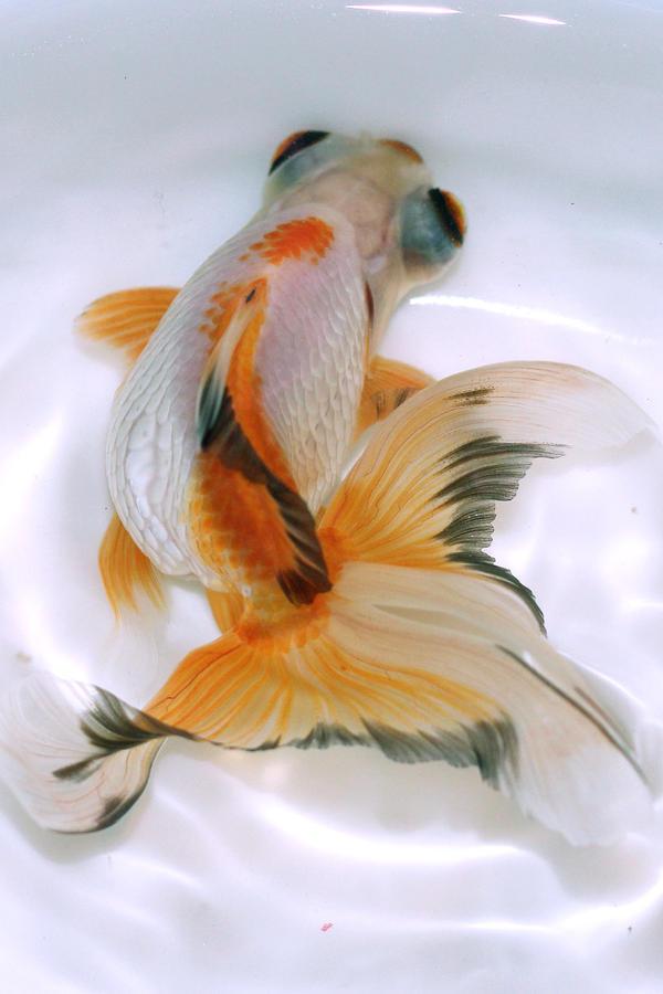 Pesca by FishPanda
