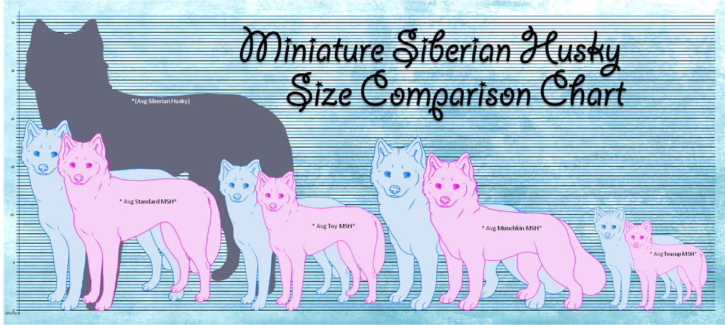 Visual Size Chart Of The Miniature Siberian Husky By Aixarawr On