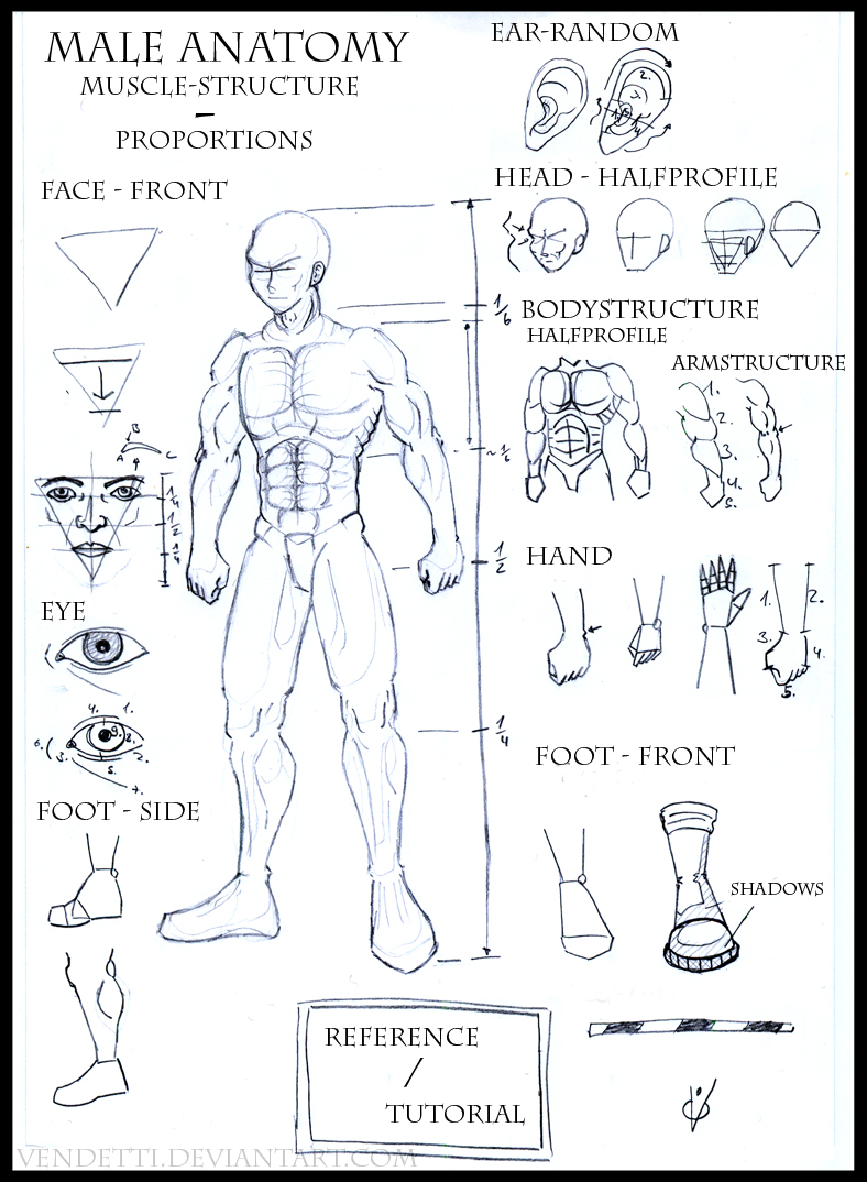 Reference Male Body By Art And Design On Deviantart