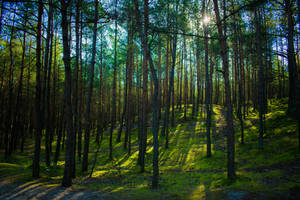 Sunny forest by Arelias17