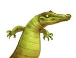 May croc