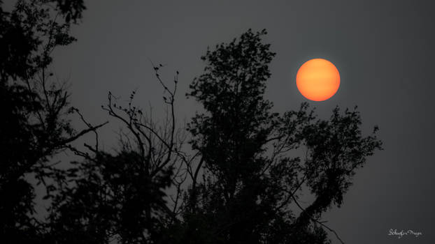[Day 2] Hazy Sun in the Northeast