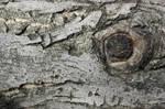 Texture tree 2