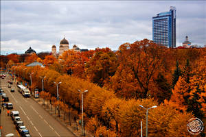 Golden autumn by kuzjka