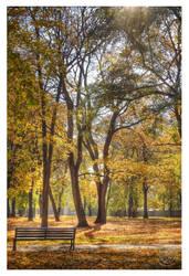 Sunny fall hour by kuzjka