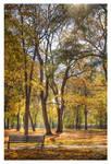 Sunny fall hour