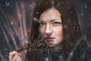 Falling Snow by Crims0nPhotography