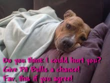 SAVE PIT BULLS by KittySong