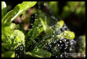 Bubbles. by ellieLOVESaurelio
