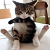 Flirty/Goofy 'Tude Icon by RoseOfTheNight4444
