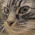 Stink Eye Cat