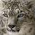 Snow Leopard Icon 3