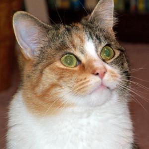 ellana's Profile Picture