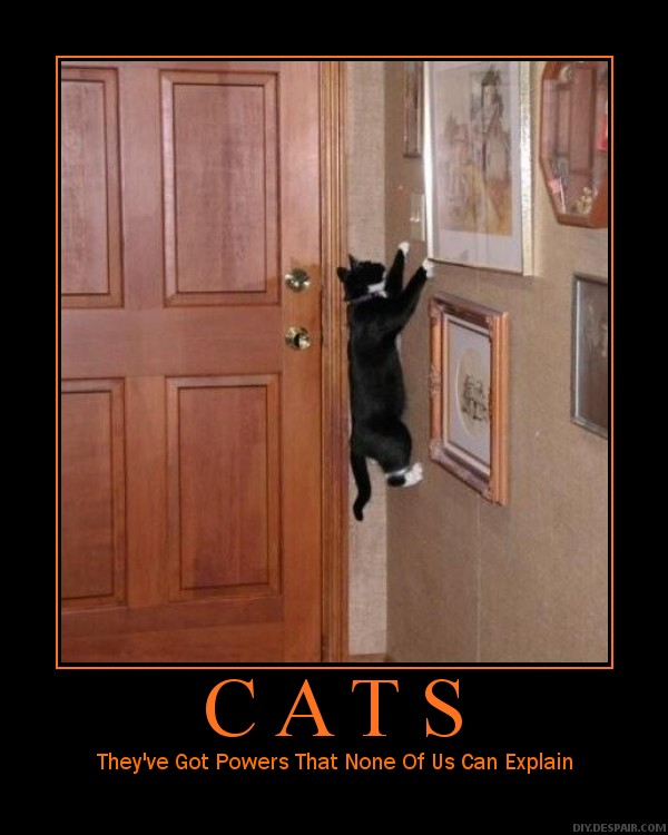 Imágenes graciosas, bizarras, estupidas Motivational_picture_31_cat_by_kiwikittyofmahem
